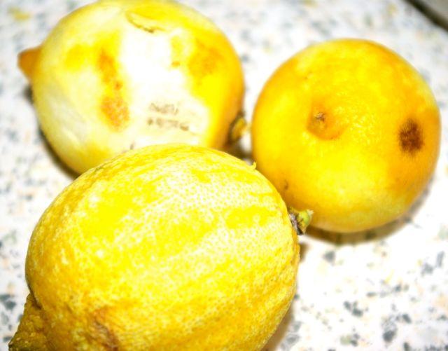 Zitronen geschält