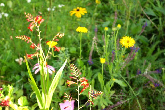 intaktes Blumenbeet