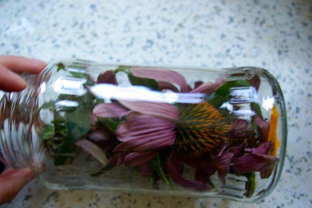 Echinacea im Glas