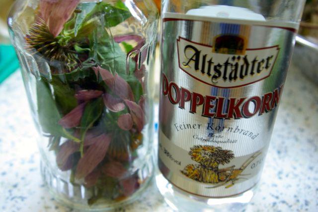 Echinacea mit Alkohol