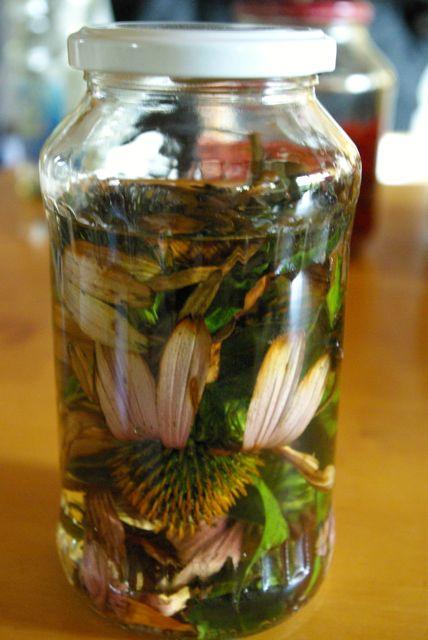 Echinacea verschlossen