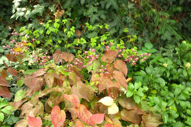 Pinke Blätter