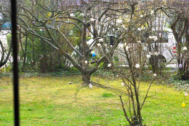Eichkater im Baum