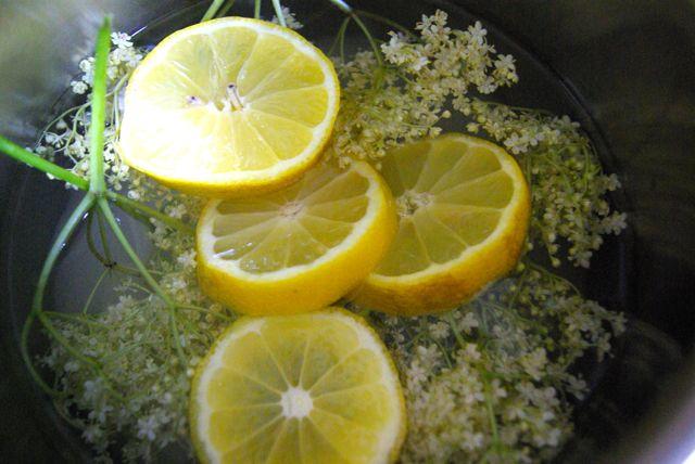 Zitronenholunder