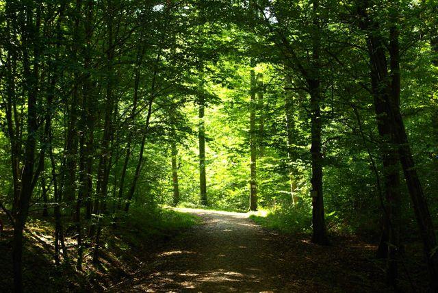 Walddurchgang