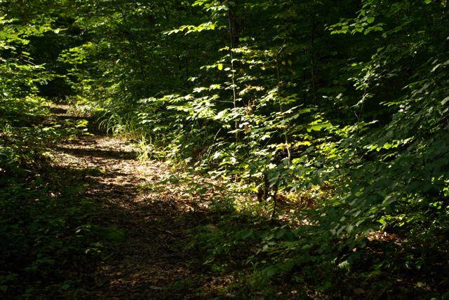 Waldschatten