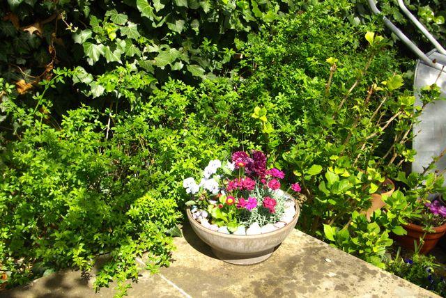 Gartensonne