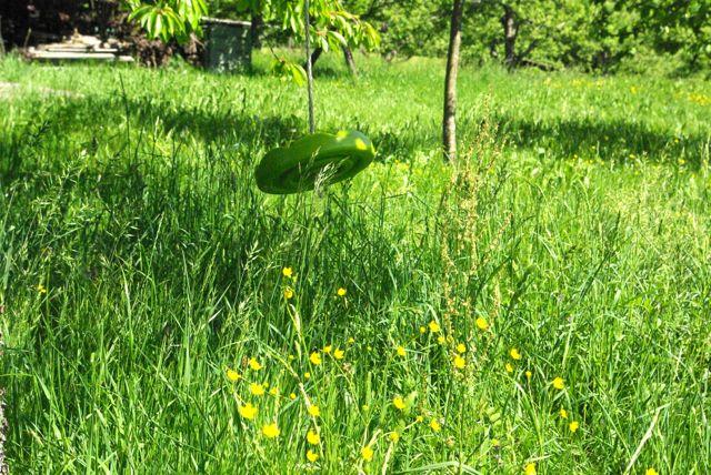Grasschaukel