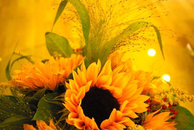 Sonnenblumenblüte