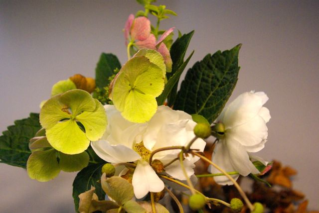Veganhortensien