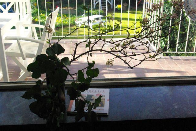 Blütenzweig2
