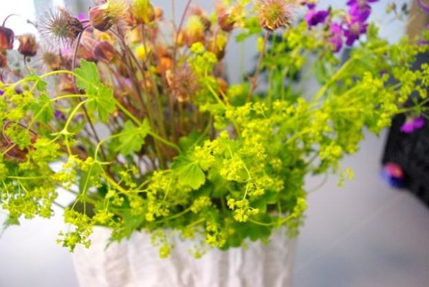 Wiesenblumen1